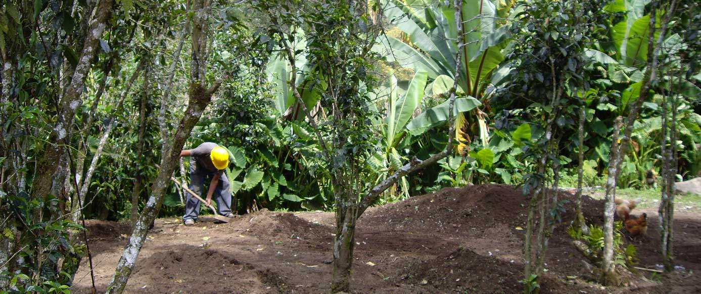 Bioanbau von Kaffee in Guatemala